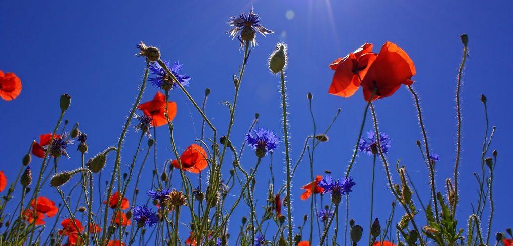 """Primavera: """"Splendere di nuovo"""""""