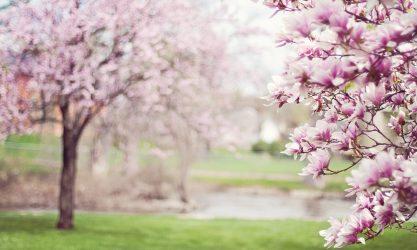 Primavera e speranza per affrontare la stanchezza da pandemia